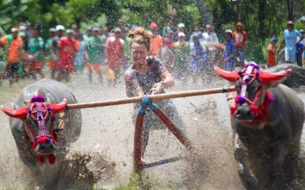 Barapan Kebo Buka Festival Pesona Moyo 2018
