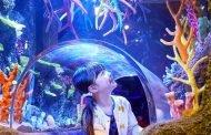 Legoland Malaysia Buka Wahana Sea Life pada April 2019
