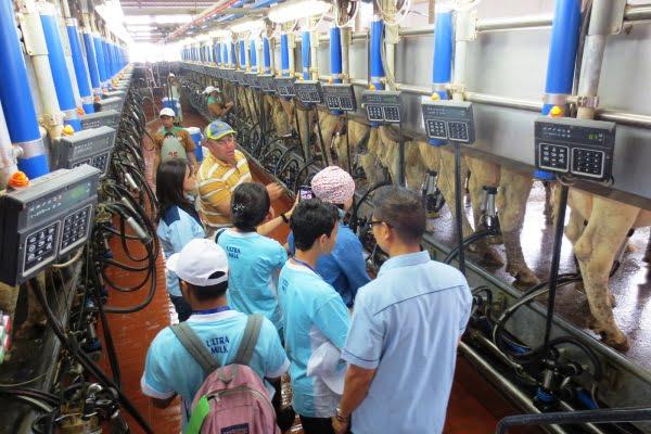 Rayakan Hari Susu Nusantara Bersama Keluarga di Peternakan Modern