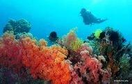 Ikuti Ajang Lomba Fotografi dan Eksplorasi Bawah Laut  Indonesia