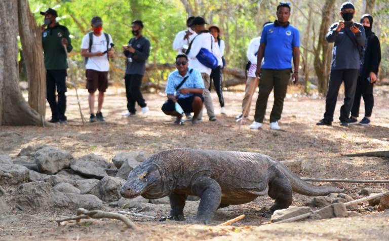 Kunjungan Wisatawan ke Taman Nasional Komodo Kini Diterapkan Registrasi Online