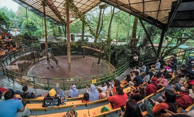 Kemenparekraf Ajak Tenaga Kesehatan ke Taman Safari